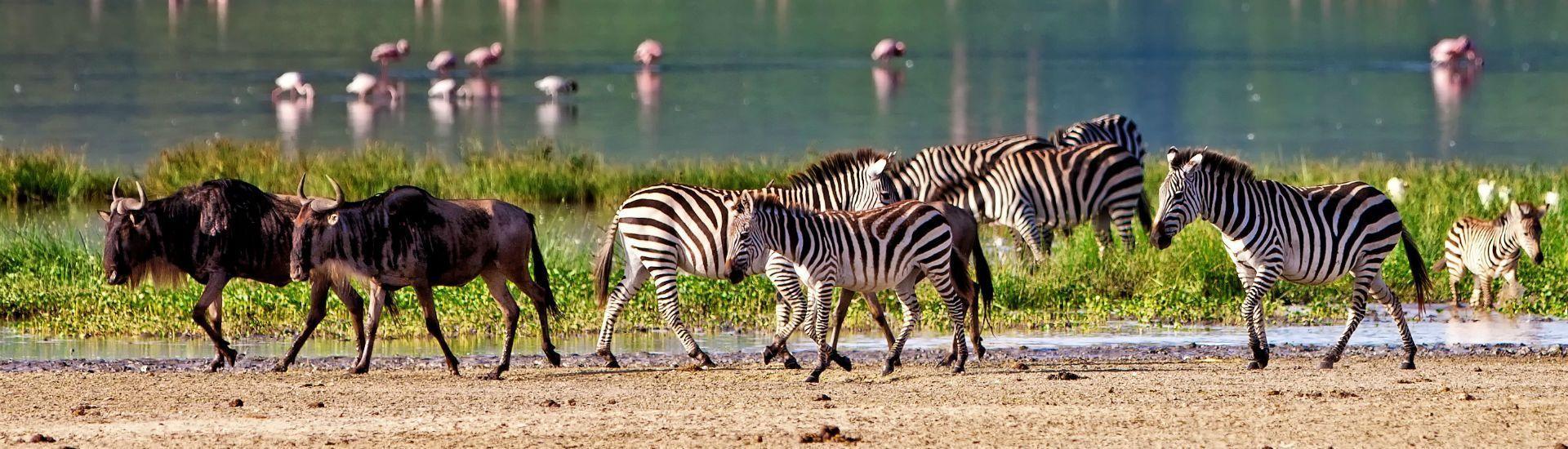 la-gran-migracion-serengeti-mara