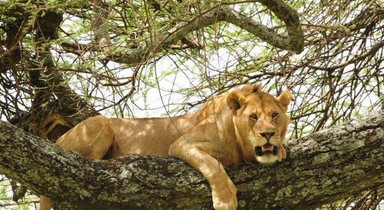 leon-trepador