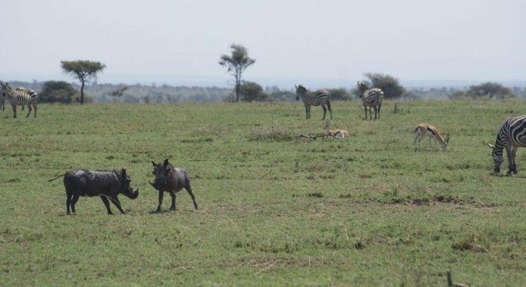 pumba-en-serengeti